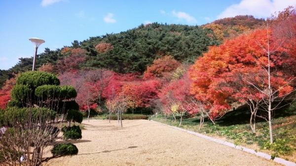 단풍으로 붉게 물든 아름다운 영광 불갑사-1.jpg
