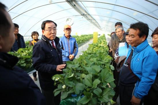 영광군, 명품딸기 생산을 위한 현장 기술지원 강화-3.JPG
