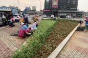 영광군, 9월에 집중된 행사에 맞춰 도로변 꽃단장에 나서
