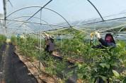 영광군 산림공원과, 불갑면 블루베리 농가 일손 지원