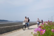 염산면 설도항 둘레길  코스모스 꽃길 따라 자전거 여행을 떠나요!