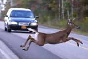 도로 위에 죽어가는 동물 사체...해마다 60만 마리