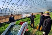 영광군, 쑥 재배 포기 농가 기계화 수확으로 웃음꽃 활짝!