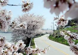 봄 향기 따라 영광으로 떠나요!  봄 여행을 준비하고 있다면?