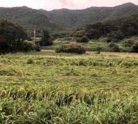 영광군, 2020년 벼 농작물재해보험 가입률 '도내 1위'